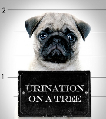 dog arrest,  simon's dog, urination on a tree
