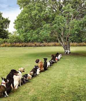 dogs queuing for pee