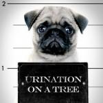 dog arrest,  simon